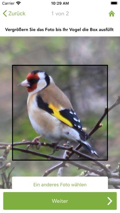 messages.download Merlin Bird ID von Cornell Lab software