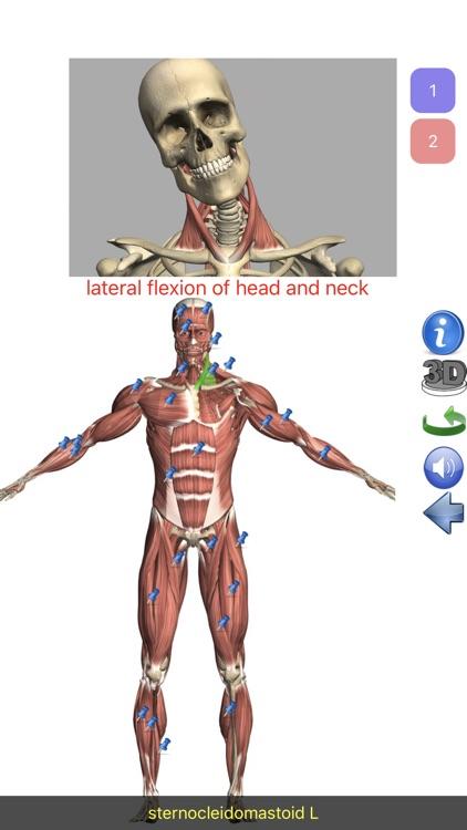 Visual Anatomy Lite screenshot-0