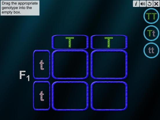 Monohybrid Cross screenshot 13