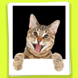 Cats in your photos