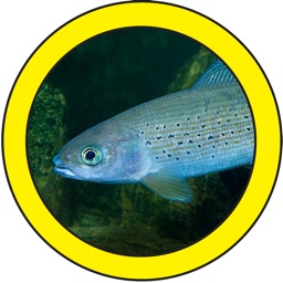 Fish Sorter