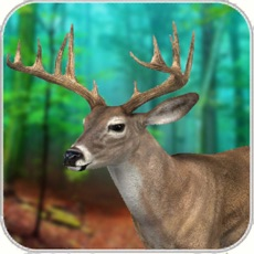 Activities of Real Deer Hunting-the Huntsman