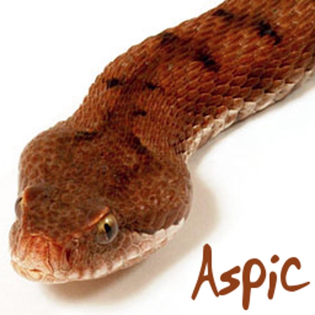 Aspic hack