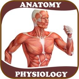 2021 Human Anatomy Atlas