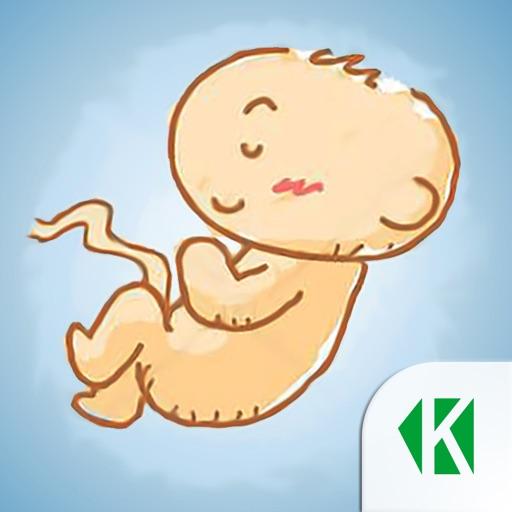 Беременность по неделям KLO