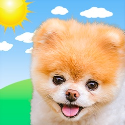Boo Weather: Pomeranian Puppy