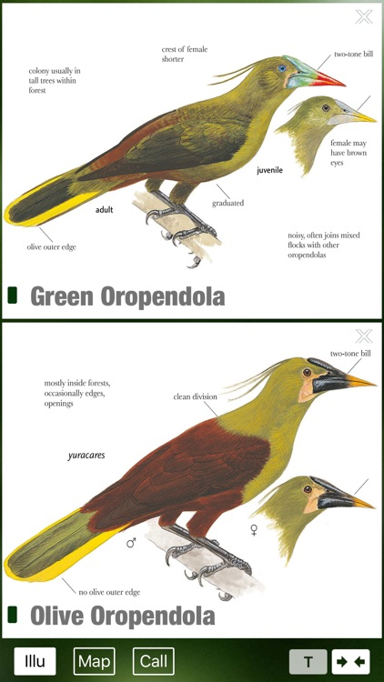 All Birds Ecuador field guide screenshot-4