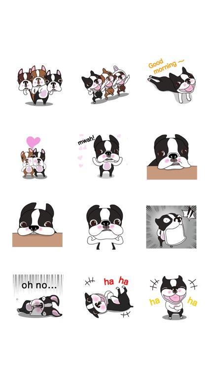 Animated Boston Terrier 1 screenshot-4