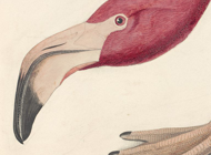 Audubon Artworks Stickers