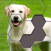 Hexa Jigsaw Puzzle ® free Coins hack