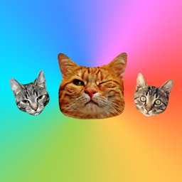 Cat Stickers for Messages