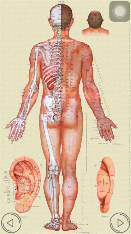 人体穴位-专业按摩针灸神器