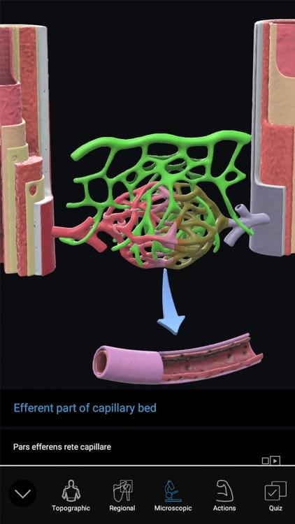 3D Organon Anatomy Enterprise