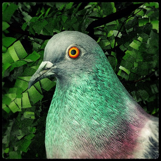 Pigeon: A Love Story icon
