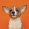 App Icon for Good Boi! Puppy Sound Training App in United Kingdom IOS App Store