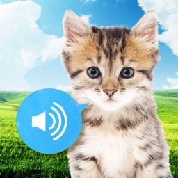 Animal sounds - Images, Noises