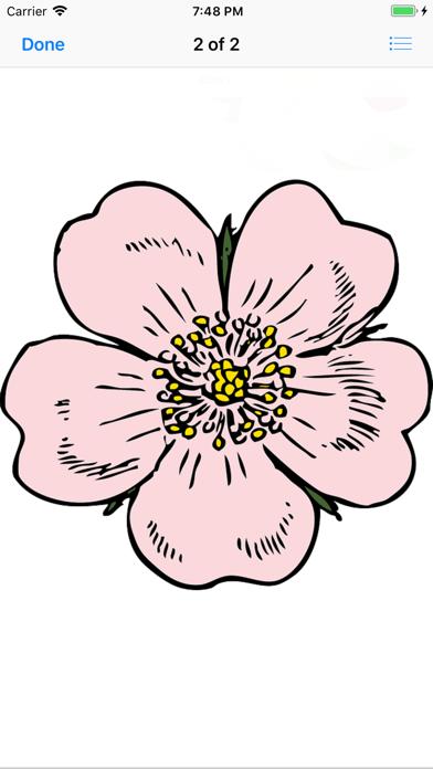点击获取Apple Blossoms