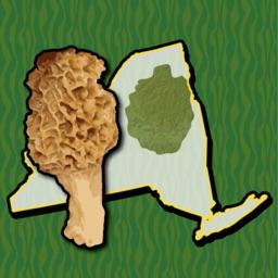 Adirondack Mushroom Forager NY