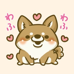 japanese shiba-inu with you