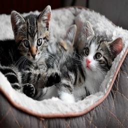 Cute Kitty Cat Wallpapers HD