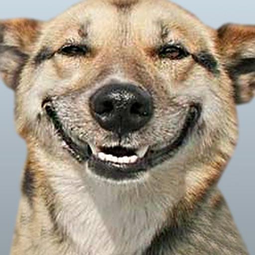 Funny Doge