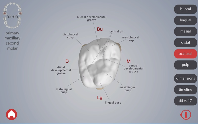 Dental Corpus Primary скриншот программы 4