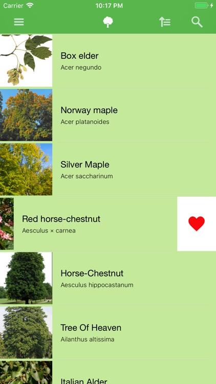 Deciduous trees screenshot-4