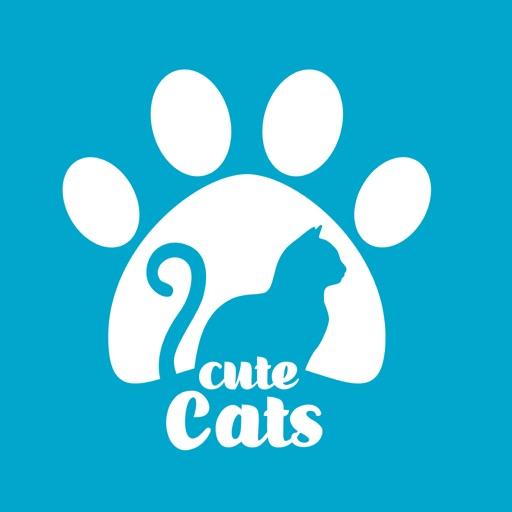 كيوت كاتس   Cute cats