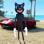 Cartoon Cat Crime City Hero 3D