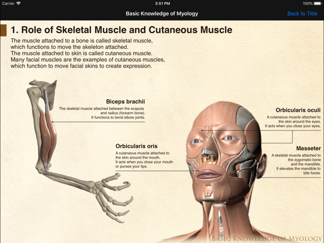 Ds Anatomy Head Neck On The App Store