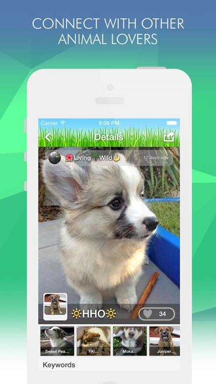 Pets Amino screenshot-2