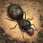 The Ants: Underground Kingdom на пк
