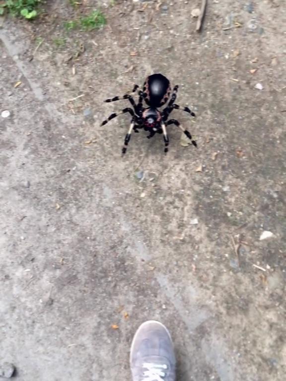 AR Spiders Screenshots