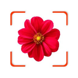 Plant Identifier - FindPlant