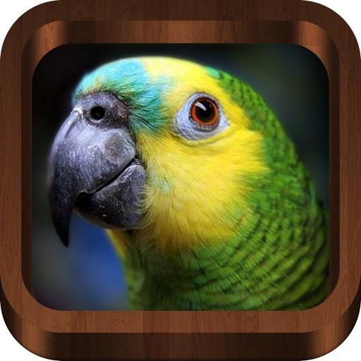 Bird Calls - Bird Song & Guide