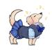 Cute Miniature Dachshund Dog