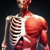 发现人体 3D: 三维立体解剖图谱