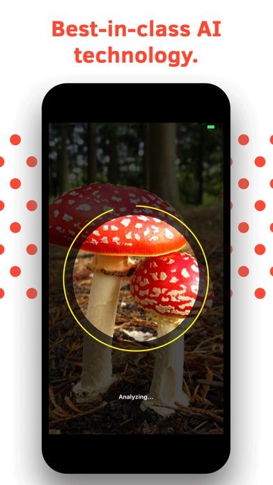 Mushroom Identification screenshot 4