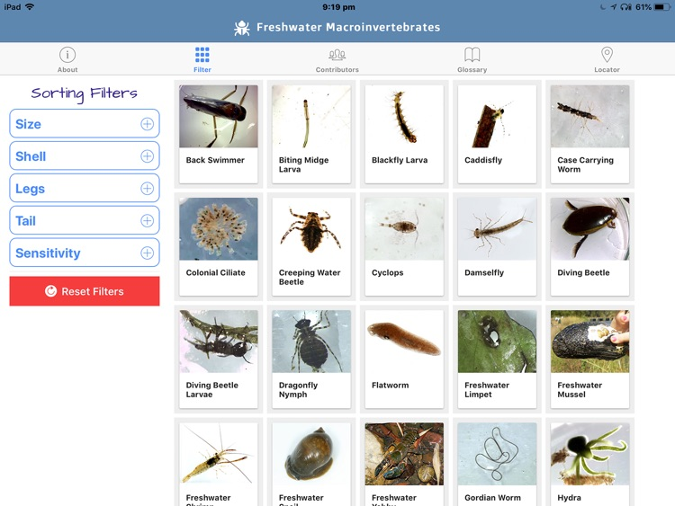 Freshwater Macro Invertebrates screenshot-1