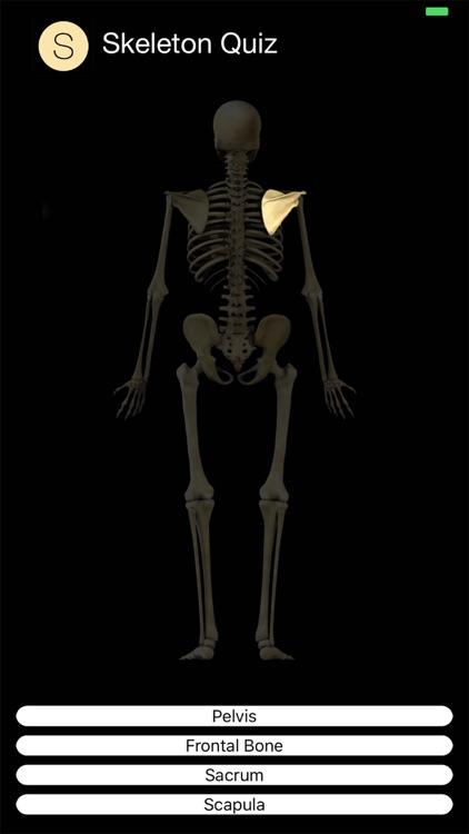 Skeleton Quiz