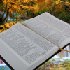 Marie Finch - Track Your Bible Reading artwork