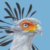 Southern African Birding CC - Roberts Bird Guide 2 artwork