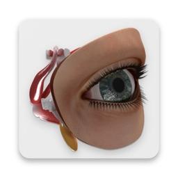 Human Eye - Augmented Reality