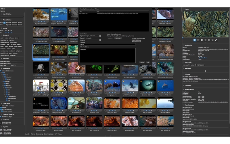 Videux Pro AS