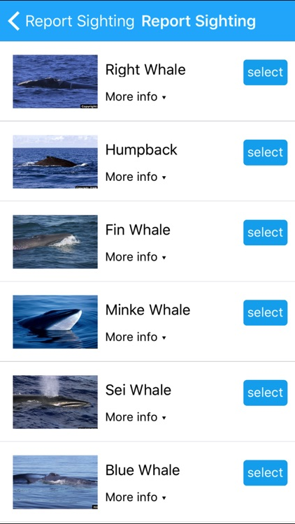 Whale Alert - Reducing Ship Strikes - Worldwide screenshot-3