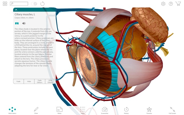 Human Anatomy Atlas 2017 Complete 3d Human Body On The Mac App Store