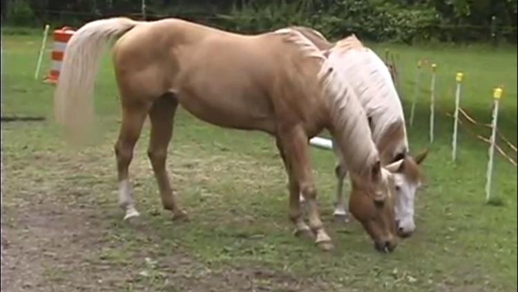 Horse Care screenshot-3