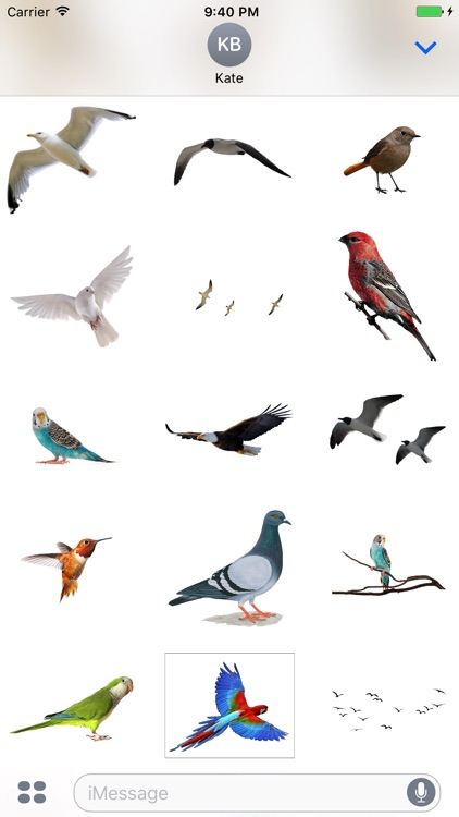 Flock of Birds Stickers