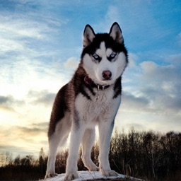 1000+ Unique Dogs Wallpapers & Backgrounds HD