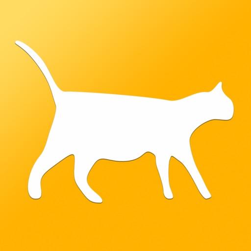 Cat Breeds: Types of Cat